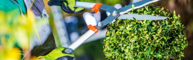 Informe-de-mantenimiento-de-áreas-verdes