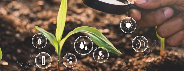 Fertilización del suelo
